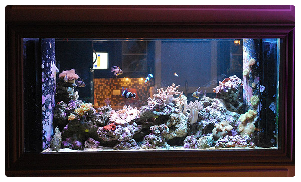 Chicago Fish and Coral